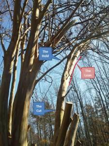Branch Cut 2